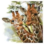 Broderie Diamant kit  intermédiaire Tendres girafes